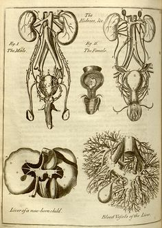 Nicholas Culpeper (https://www.pinterest.com/pin/287386019948619633). 1652 - 1653. English physician and complete herbal, Ed. C. 1790 (https://www.pinterest.com/pin/287386019949167300).