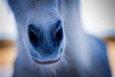 Curious horse :)