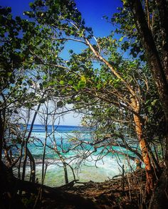 Sous les ombrages  #tartane #plagedessurfers #surfersparadisebeach #madinina972 #beautifulisland #ig_martinique #ig_caribbean_sea #ig_captures #seaandsunaddict #caribbeanlifestyle #lovemyislandlife #jenemenlasseraijamais by vn972 http://ift.tt/1PI0tin