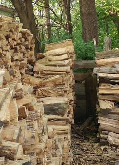 Can You Find The Cat Hidden In This Pile Of Logs?
