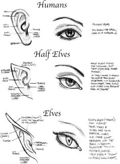Manga Drawing Techniques Art reference for drawing fantasy characters; how to draw elf eyes and elf ears // Interesting. now I must go draw some fantasy characters. Drawing Lessons, Drawing Techniques, Drawing Tips, Drawing Sketches, Sketching, Drawing Ideas, Drawing Drawing, Drawing Poses, Anatomy Drawing