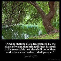 """✝✡Psalms 1:3 KJV✡✝ #Shalom ( Peace ) Ya'll ( http://kristiann1.com/2015/09/08/ps13/ ) """"And he shall be like a tree planted by the rivers of water, that bringeth forth his fruit in his season; his leaf also shall not wither; and whatsoever he doeth shall prosper."""" #PrayForIsrael, #PrayForUSA"""
