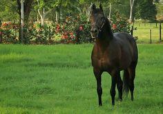@somosqfilms - #Posando #para #Q #films #polo #racing #horses #horse #caballo #pradera @somosqfilms #somosqfilms #qfilms #productoraaudiovisual #audiovisual #videomarketing #marketing #marketingdigital #videopolo #argentina #usa #españa #venezuela