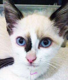 Owner Didn't want injured Kitten!