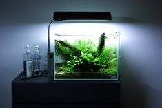 My first attempt on a high tech nano with ADA gears. Entered to the AGA 2009 Contest and was Featured in the Practical Fishkeeping Magazine.