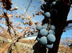 As vinícolas de Mendoza estão concentradas principalmente nas regiões de Maipú (a 15 km da cidade de Mendoza), Luján de Cuyo (a 20 km de Mendoza) e Valle de Uco (a 80 km de Mendoza). Boa parte delas podem ser visitadas por turistas