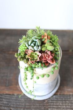 From this angle - looks like a succulent topped wedding cake! Growing Succulents, Succulents In Containers, Planting Succulents, Air Plants, Indoor Plants, Little Gardens, Cactus Decor, Miniature Plants, Succulent Arrangements