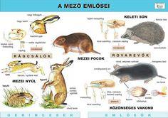 Toddler Preschool, Homeschool, Science, Teaching, Activities, Animals, Kids, Study, Speech Language Therapy