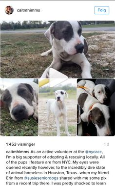 11/24/16 please read whole story. DIXIE AND SCARLETTE! FROM TEXAS HEADING FOR MR BONES AND CO IN NY SOON !! PLEASE READ AND SHARE TO SAVE MOM AND DAUGHTER!! /ij https://www.instagram.com/p/BNKpkc7h3bp/
