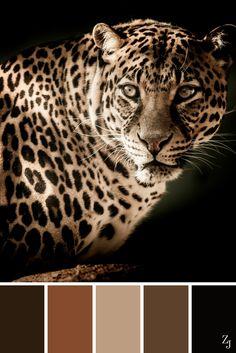 ZJ Colour Palette 66 #colourpalette #colourinspiration