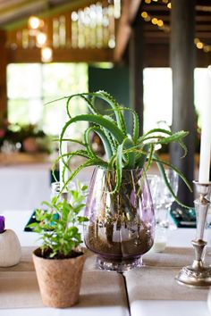 Succulents herbs and jewel tones by Eco-Chic Weddings 2014-02-15 Leigh & Byron Wedding - Rosemary Hill Photo By van der Bijl Photography