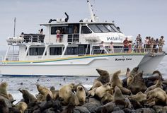 Wildlife Coast Cruises | Phillip Island