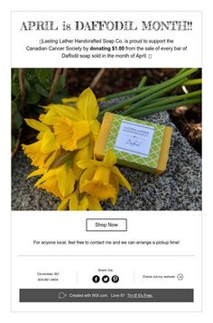 Support cancer research with daffodil soap! Cancer Support, Good Advice, Daffodils, Soap, Plants, Lifehacks, Plant, Bar Soap, Soaps