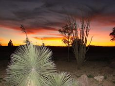 """Sunset"" Pancho Villa State Park, NM"