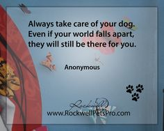 Always take care of your dog. Even if your world fall apart, they still be there for you. www.rockwellpetspro.com. #Dog