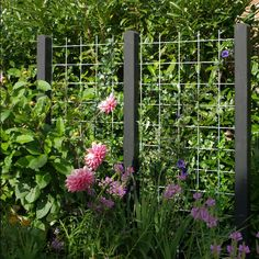 Espalier... (living fence)