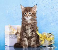 Gwiazdkowe #prezenty dla kotów