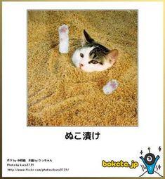 ネコbokete(ボケて)秀逸ボケ - NAVER まとめ I Love Cats, Neko, Funny Cats, Humor, Animals, Cat Breeds, Animales, Animaux, Humour