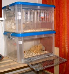 DIY cage for #mice - ( #Curver plastic storage boxes )