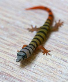 Ashy Gecko  - Sphaerodactylus elegans