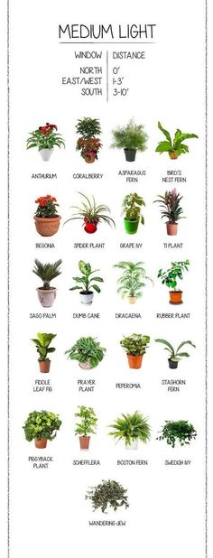 House plants are good for you. It's true! There is a body of extensive research that shows how house plants assist in cleaning the air y...