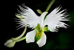 10 vackra blommor – kika närmare och häpna över naturens verk – Sköna hem