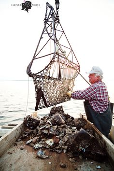 oystering on the choptank Oyster Bed, Smith Island, Cider House Rules, Lobster Fishing, Grand Isle, Bay Boats, Crab Shack, Oyster Shells, Chesapeake Bay