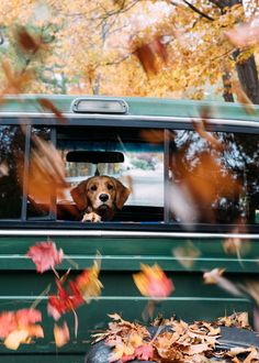 Autumn and this beagle reminds me of ours who passed away. Cute Baby Animals, Animals And Pets, Funny Animals, Cute Puppies, Cute Dogs, Dogs And Puppies, Doggies, Autumn Cozy, Fall Halloween