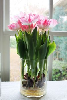 How to Grow Tulips or other Perennials in Glass Jars all Year Around in your Home.