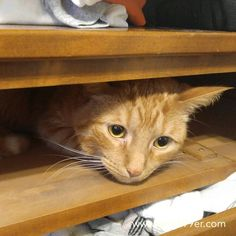 Today I'm continuing my #onethingaday project with something bigger - I organized and purged my dressers. Now everything has a home and is easy to find. I did have a helper as well - because well...he fits! No wonder we have cat hair on everything ;). One bag to the trash of items that have holes and are too far gone for yard clothes one big box to charity.  Three days into the new year three things organized! Slowly but surely. How are you tackling the new year and what goals have you set?…
