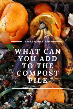 From soup to nuts there are endless items that can be added to the compost pile.