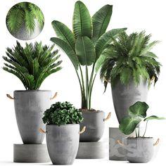 Deko models: Indoor - Plant Collection Saving Water – The Bath vs.