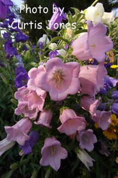 Botanical Interests High Quality Seeds and Garden Products Different Types Of Flowers, Canterbury, Orchids, Florals, Seeds, Gardens, Rose, Creative, Plants