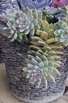 The plants' sculptural shapes, textures, lines and color help us create pretty pots to enjoy on the porch or afternoon-shaded patio, where we can skip the searing sun.  Growing, Designing, and Crafting With 100 Easy-Care Varieties (Timber Press, $24.95) is a helpful, detailed primer on gardening with the water-wise jewels.  Aim to find one that's the right scale and proportion, and that repeats or contrasts some aspect of the pot - its color, texture, pattern or shape.  The soft orange or…