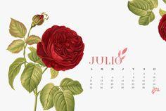 julio_desktop.jpg