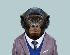 Bonobo---Pan-Paniscus-copia