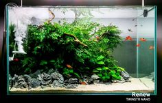 Favourites: tank by Twinstar Very healthy low tech tank. Red, green and cream sand colours… a masterwork! Aquascaping, Aquarium Aquascape, Planted Aquarium, Aquarium Landscape, Nano Aquarium, Nature Aquarium, Saltwater Aquarium, Fish Aquariums, Reef Aquarium