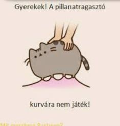 Pusheen Cat, Death Note, Asd, Funny Moments, Funny Pictures, Anime, Jokes, Kawaii, In This Moment