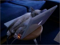 I want it!! (laptop and kitten)