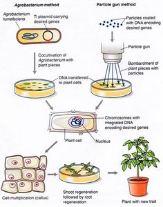 an introduction to the biological aspects of the true human cloning Scroll down this page for introductory article to human cloning - at the bottom you will find more useful human cloning resources including video on how to clone humans and useful human cloning links this site is especially aimed at students needing data for projects, essays, assignments, dissertations, debates on issues.