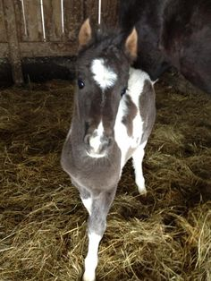 •.♡.• beautiful baby foal