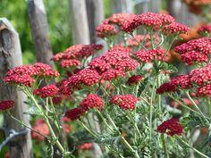 De bästa marktäckande perennerna för sol, skugga och halvskuggigt läge   Wexthuset Gardening Tips, Flowers, Plants, Inspiration, Lavender, Tips, Biblical Inspiration, Plant, Royal Icing Flowers