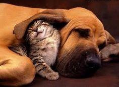 Kitten under the ear in dogs