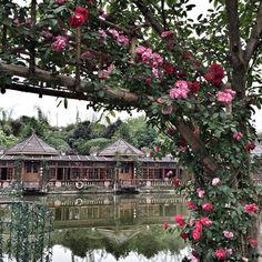 Chengdu, China.