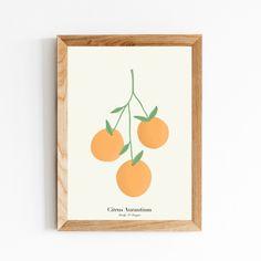 Citrus Aurantium | Orange Digital Art Print