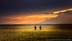 ***Horses at sunset (near Drumheller, Alberta) by Roland Agellon