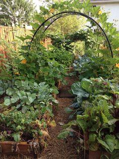 Get Busy Gardening!: 2013 Vegetable Garden Planning