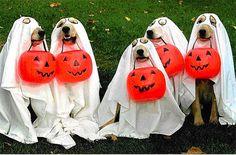 Risultati immagini per cani halloween