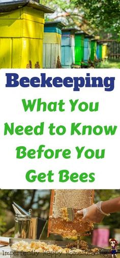 What to Consider Before You Get Bees Beekeeping - what you need to know before you get bees for your homestead, backyard or farm.Beekeeping - what you need to know before you get bees for your homestead, backyard or farm. Beekeeping For Beginners, Raising Bees, Bee Farm, Backyard Beekeeping, Hobby Farms, Save The Bees, Small Farm, Grow Your Own Food, Urban Farming