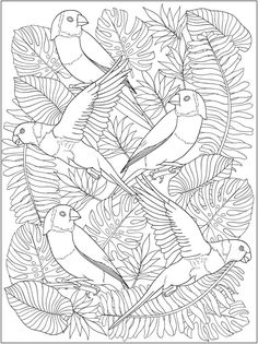 Creative Haven Truly Tropical Coloring Book Dover Publications Bird Coloring Pages, Free Adult Coloring Pages, Printable Coloring Pages, Coloring Sheets, Coloring Books, Dover Publications, Hand Embroidery Designs, Fabric Painting, Bird Art